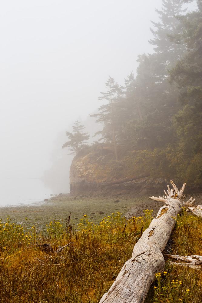 Foggy Summer Morning, Lottie Bay, Washington, 2016