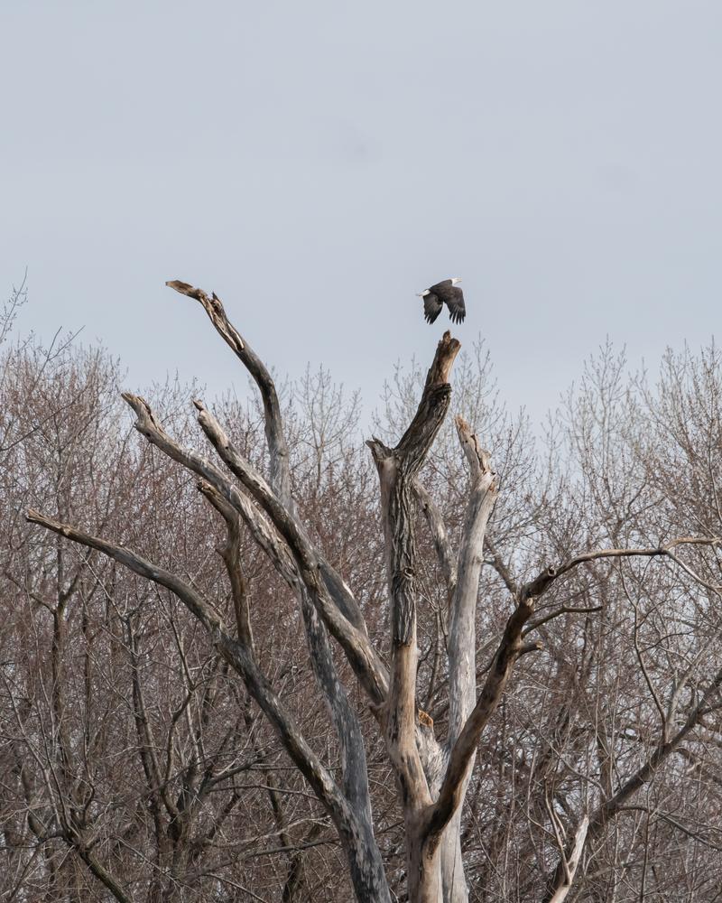 The Perching Tree Photography Art | Happy Hogtor Photography