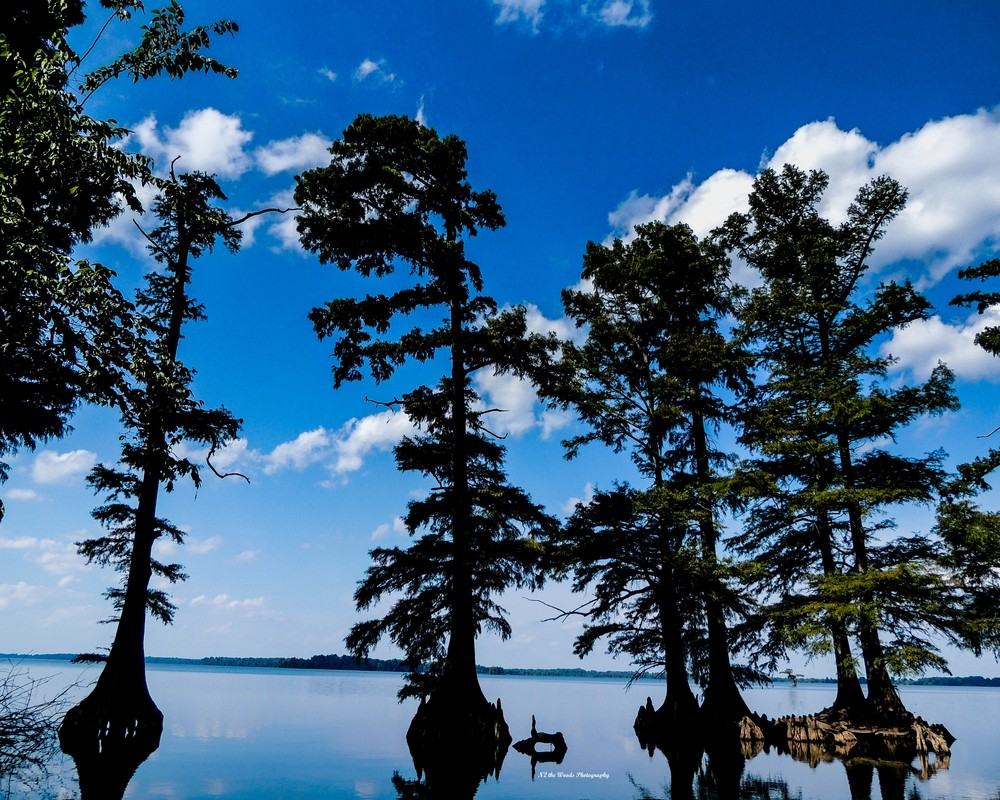 Cypress Soldiers Photography Art | N2 the Woods Photography