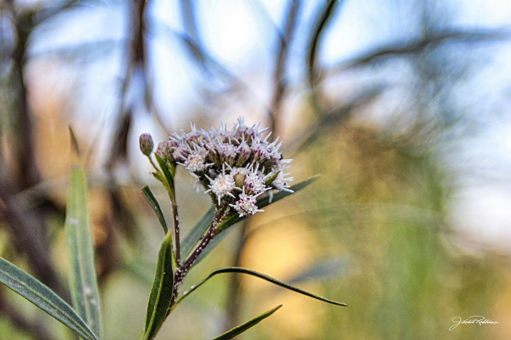 softly color natural-landscape wild-flower jackie-robbins-studio photographic-prints