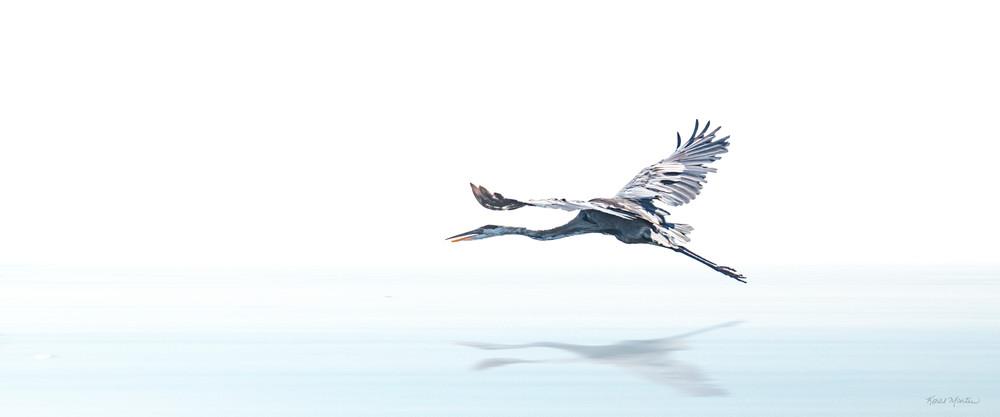 Escaping   Blue Heron 8621 Photography Art | Koral Martin Fine Art Photography