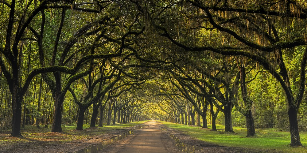 Road To Wormsloe Semi Panorama Photography Art | Ken Smith Gallery