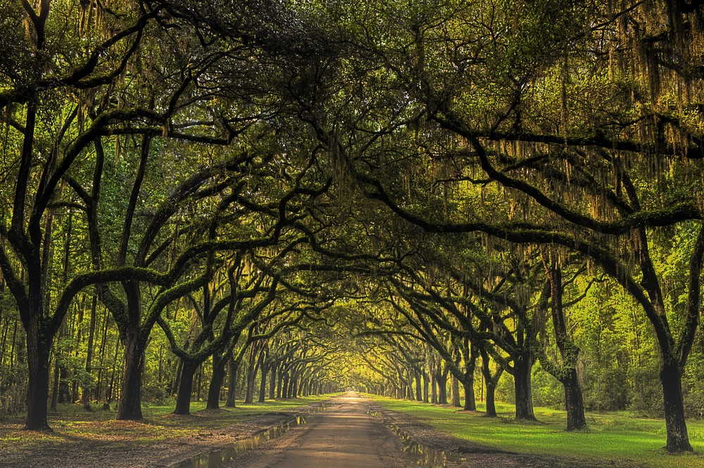 Road To Wormsloe Asf Photography Art | Ken Smith Gallery