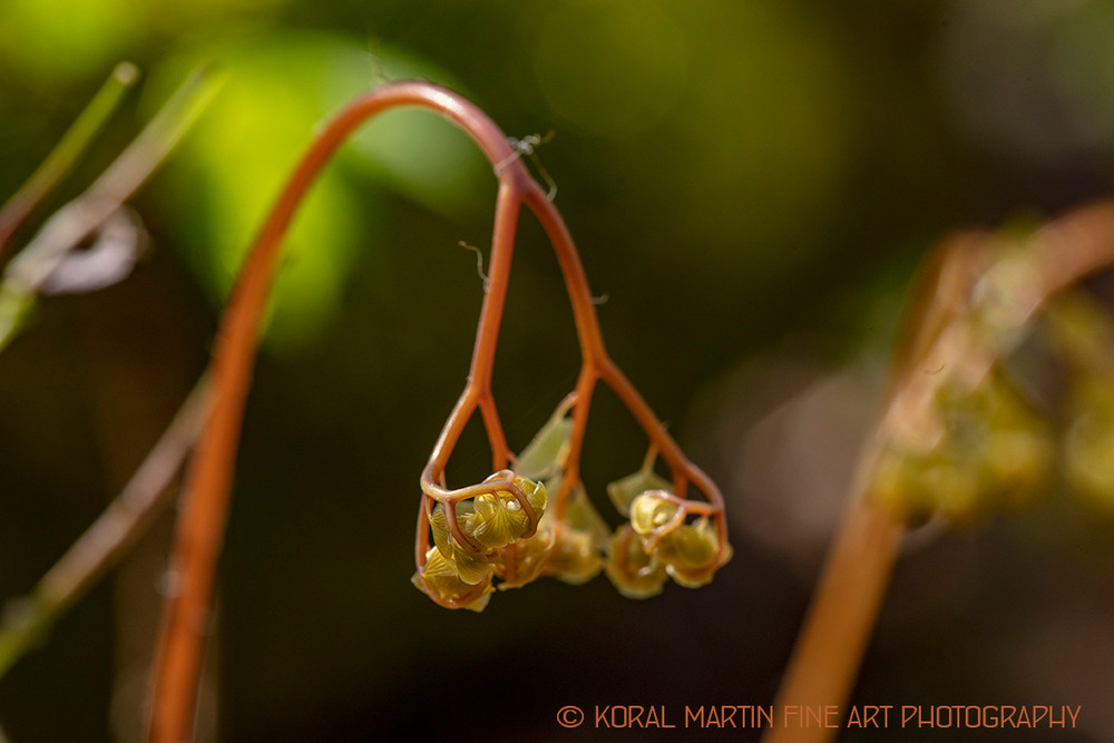Unfurling Plant 8840  Photography Art | Koral Martin Healthcare Art