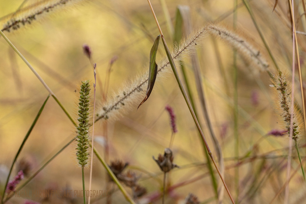 Grasses 0749  Photography Art | Koral Martin Healthcare Art