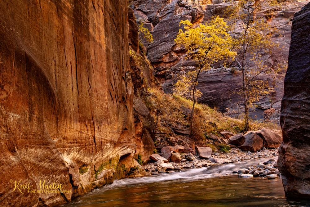 Narrows Fall Tree 2826  Photography Art | Koral Martin Healthcare Art