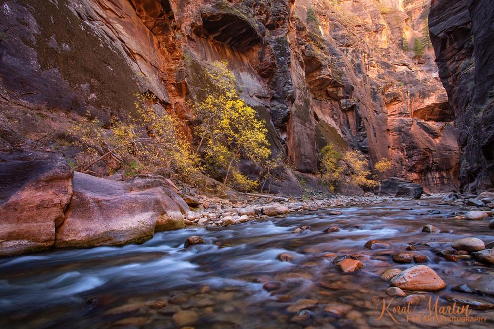 Zion Narrows Water Fall Trees 2857  Photography Art | Koral Martin Healthcare Art