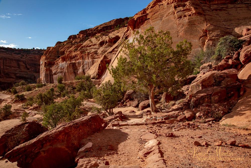 Canyon De Chelly View 3568 U 19  Photography Art | Koral Martin Healthcare Art