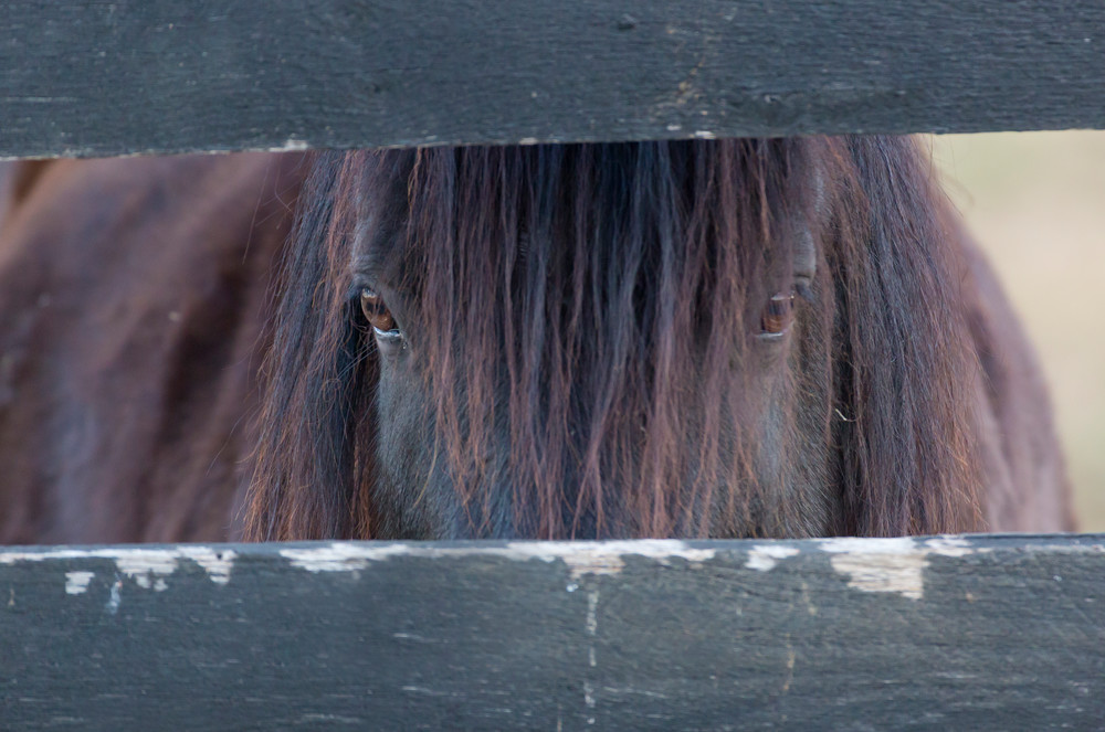 The Watcher Photography Art | Deb Little Photography