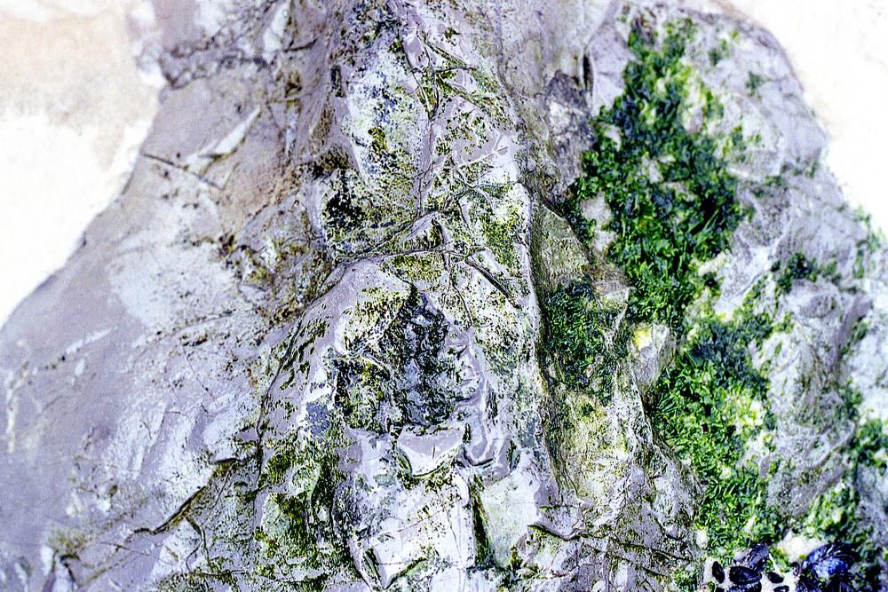 Long Beach Rock Close-Up Fine Art Print – Sherry Mills