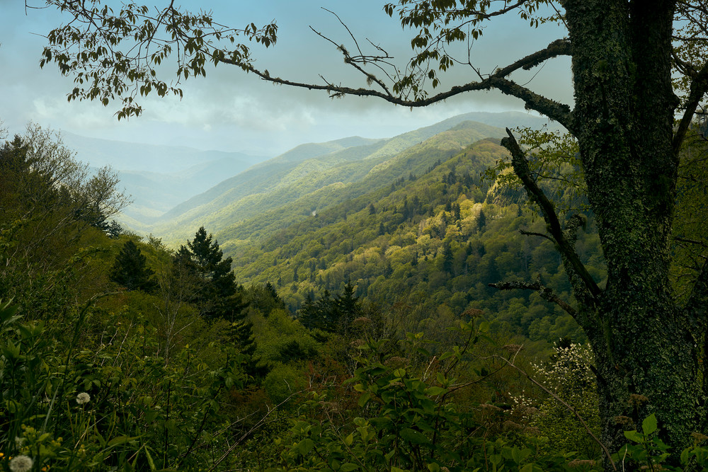Clingman's Country