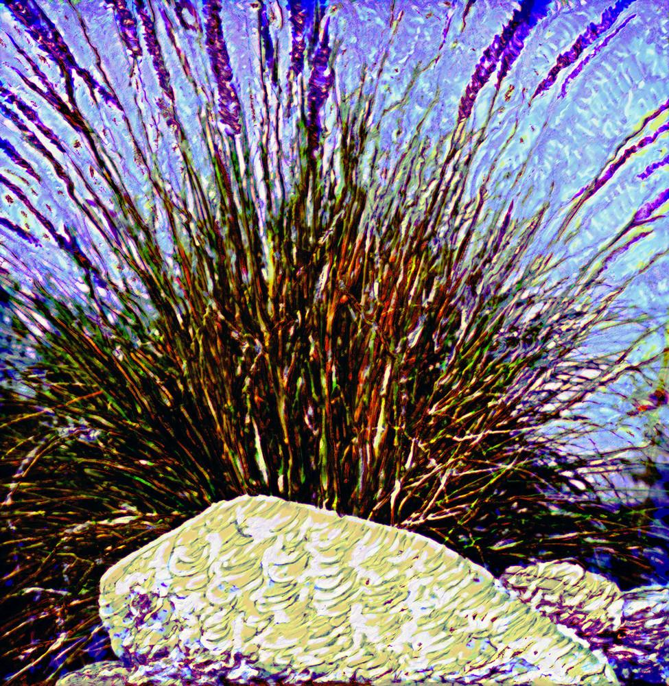 Purple Grass Photography Art | Christopher Grey Studios