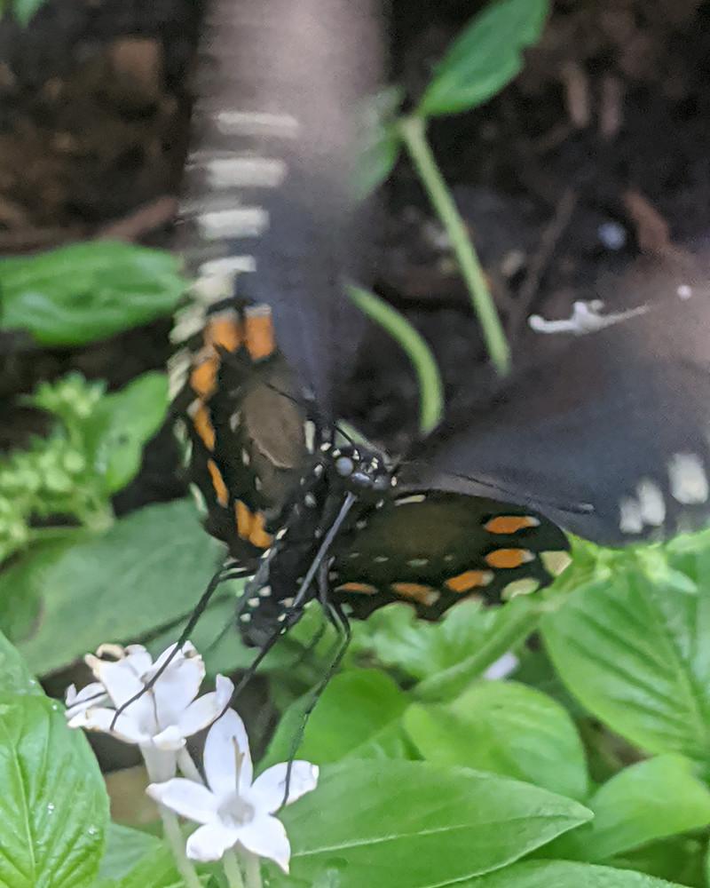 Flutter Photography Art | Emily Rose the Artist
