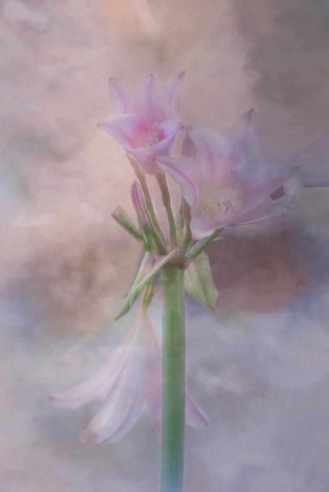 Photography of Ambrosia