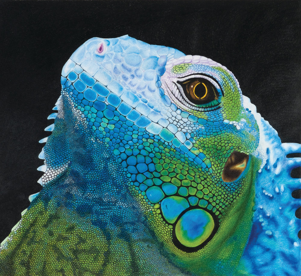 I Iguana Art | juliesiracusa