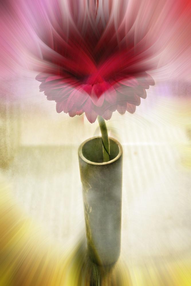 Barberton Daisyfinalcolour Art | Roy Fraser Photographer