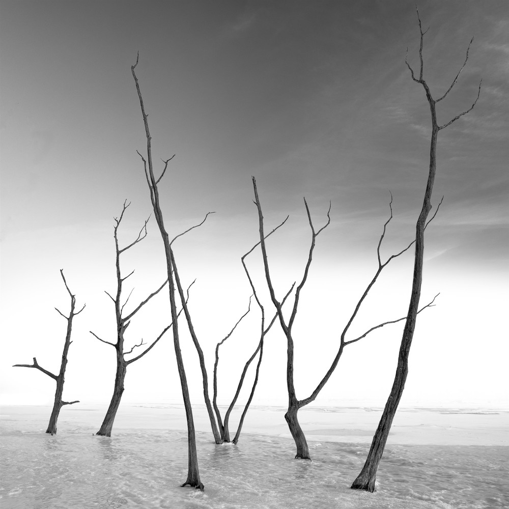 Hokkaido Study27 Art | Roy Fraser Photographer