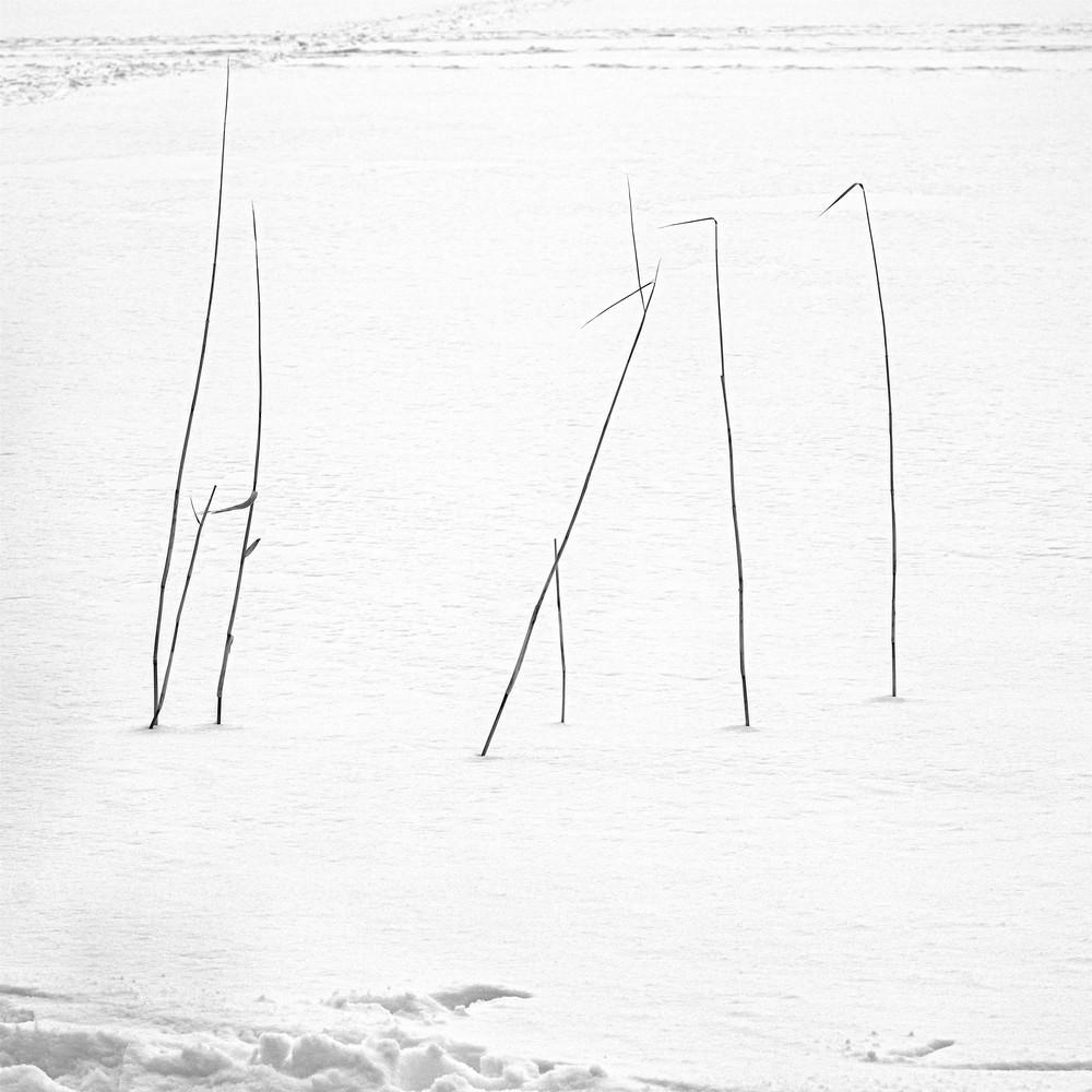Hokkaido Study29 Art | Roy Fraser Photographer