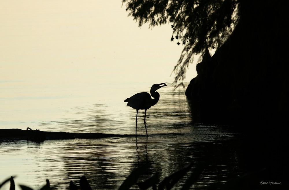 Early Morning Fishing Success     Blue Heron Silhouette 7454 Srm20 Art | Koral Martin Fine Art Photography