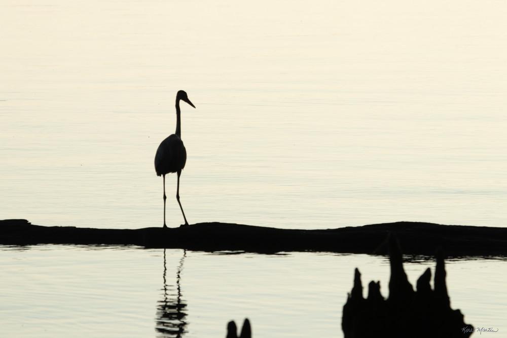 Early Morning Fishing     Blue Heron Silhouette 7521 Art   Koral Martin Fine Art Photography