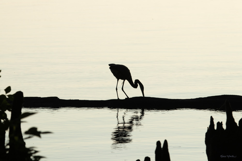 Heron Silhouettes  7522  Photography Art | Koral Martin Healthcare Art
