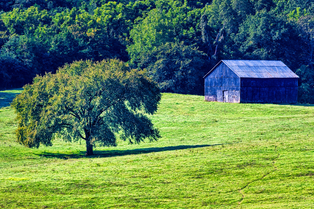 Lively Farms Tobacco Barn - Kentucky fine-art photography prints
