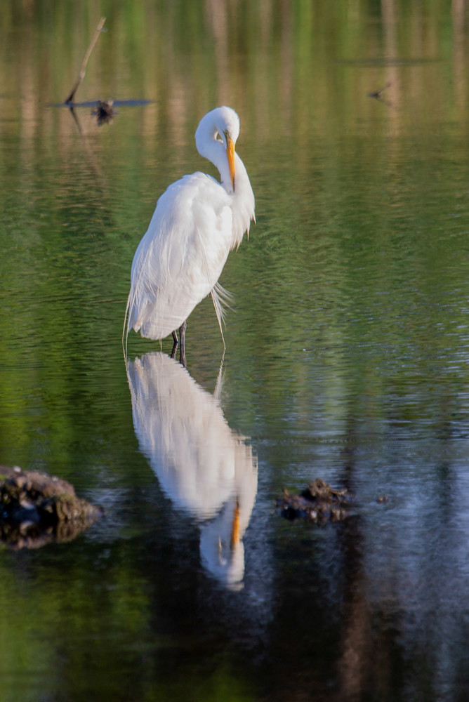 Great Egret Twist Art | capeanngiclee