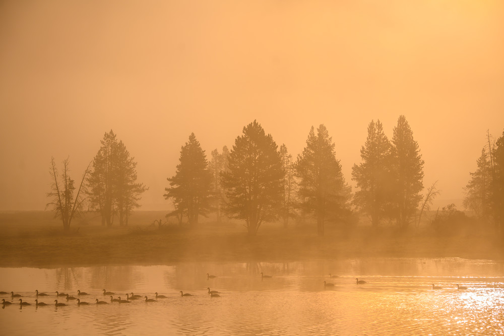 River Of Fire  Yellowstone Photography Art | Casey McFarland Photography