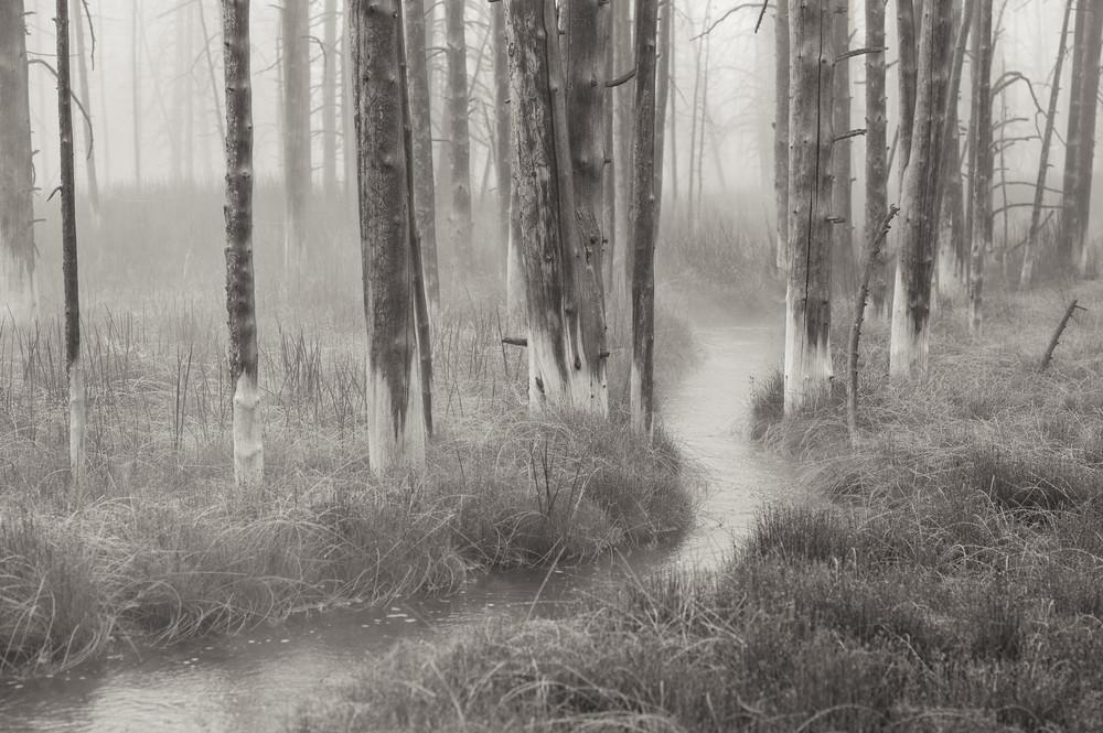Two Socks  Yellowstone Photography Art | Casey McFarland Photography