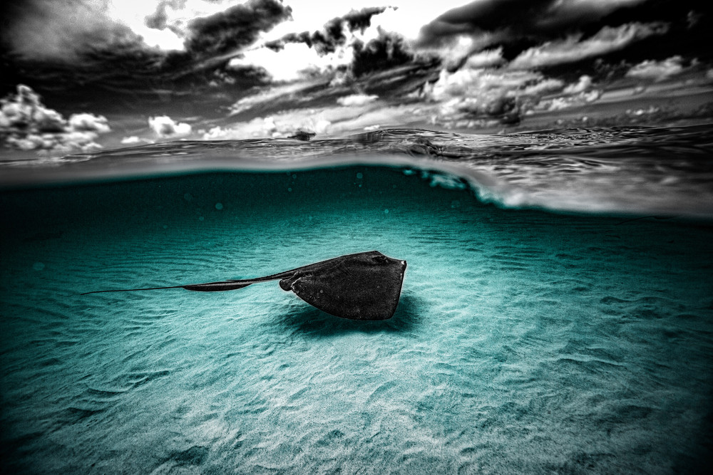 Royal Blue Slipper Photography Art | Art Sea Love