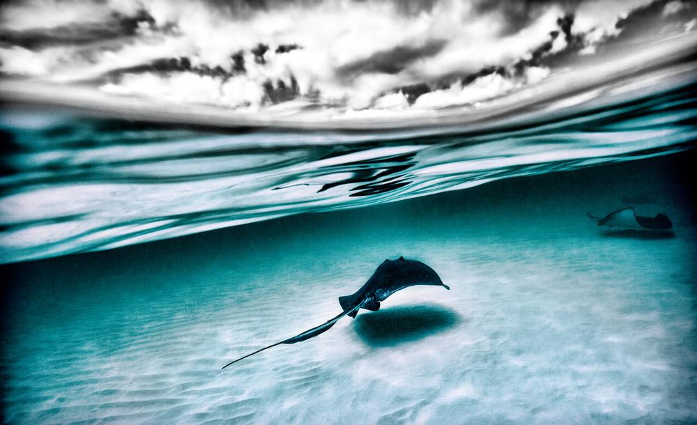 Stingray Split Tone Photography Art | Art Sea Love