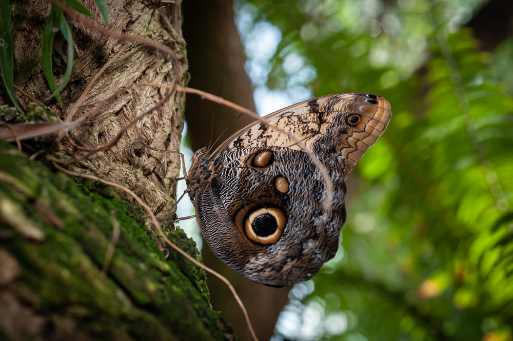 Butterfly 10 Photography Art   Cardinal ArtWorks LLC