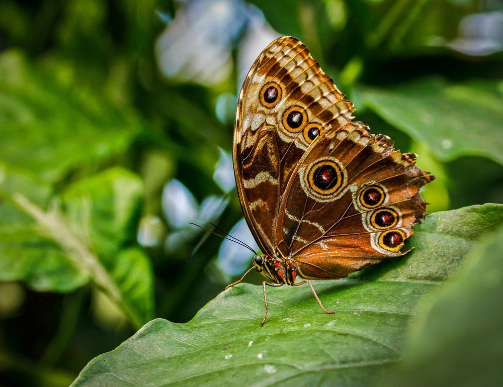 gold and brown butterfly