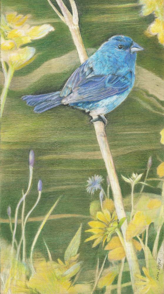 birds, indigo bunting, wildlife, wildflowers