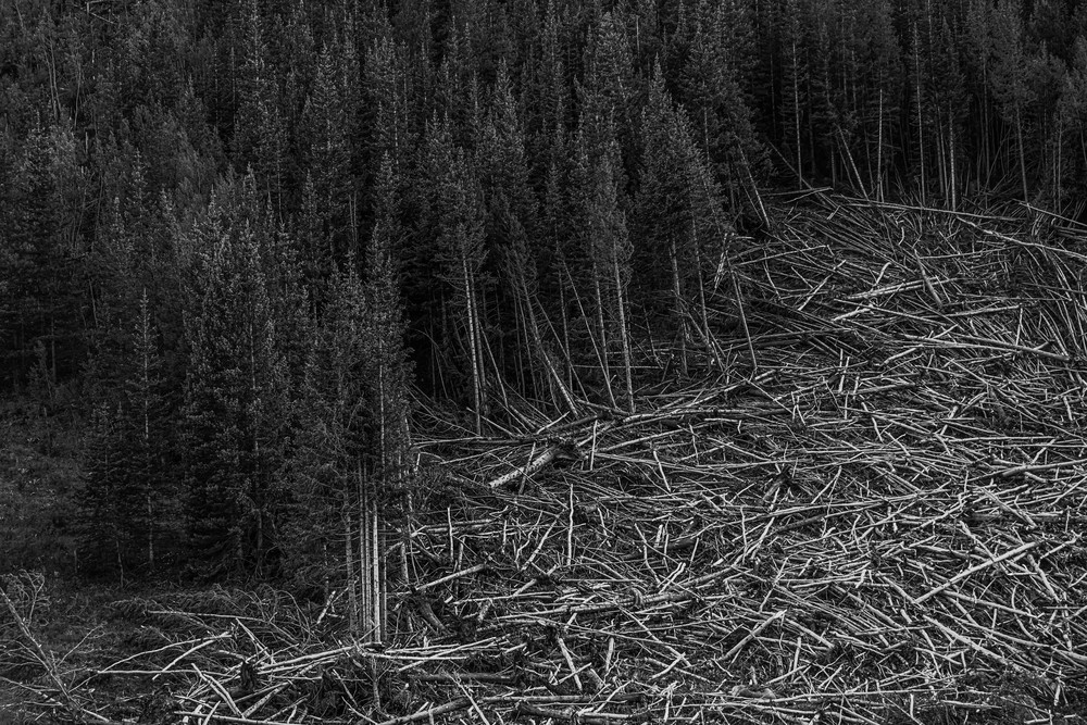 Pick Up Sticks  Just Outside Rocky Mountain Np Photography Art | Casey McFarland Photography