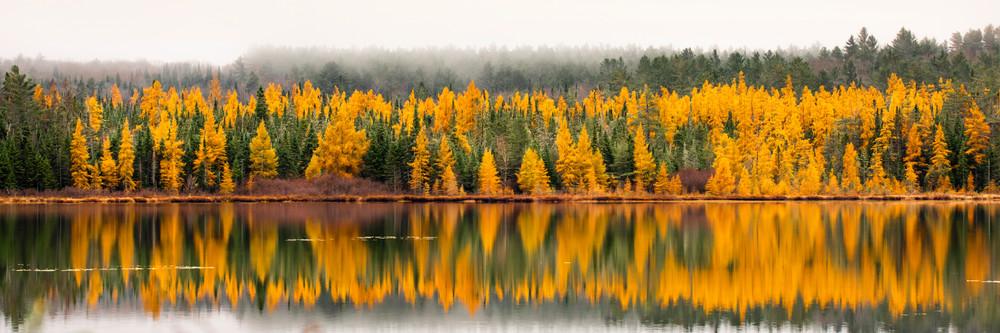 Tamarcks Trees Panoramic Photography Art | Kurt Gardner Photogarphy Gallery