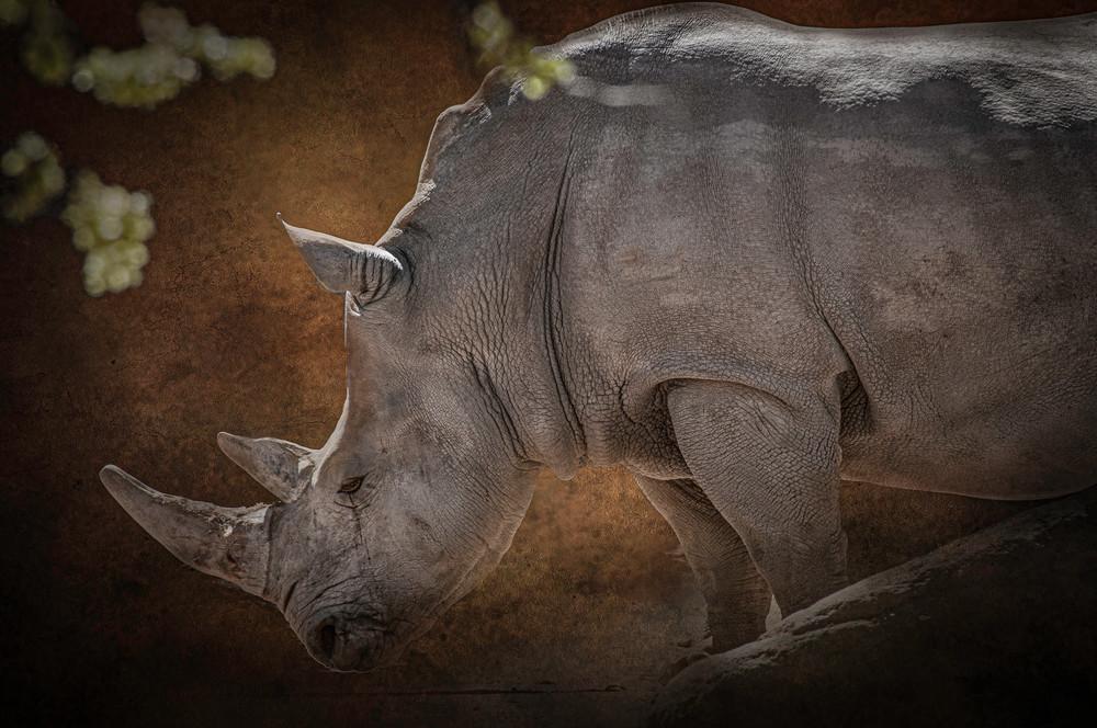 Weeping Rhino Photography Art | Kathleen Messmer Photography