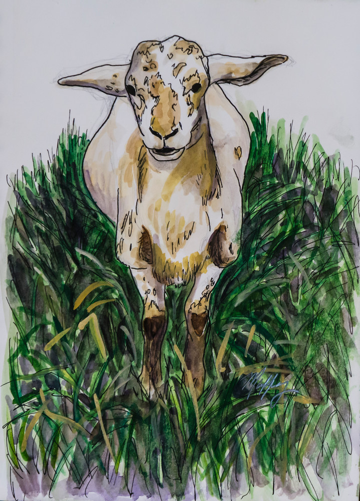 Lammy was a friendly sheep that Artist Muffy Clark Gill met and drew in watercolor during her visit to a Tennessee farm
