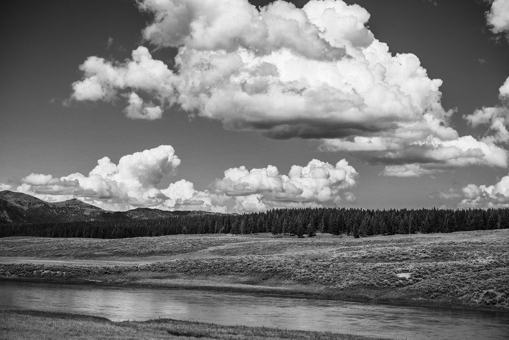 Hayden Valley Marshmallow  Yellowstone Photography Art | Casey McFarland Photography