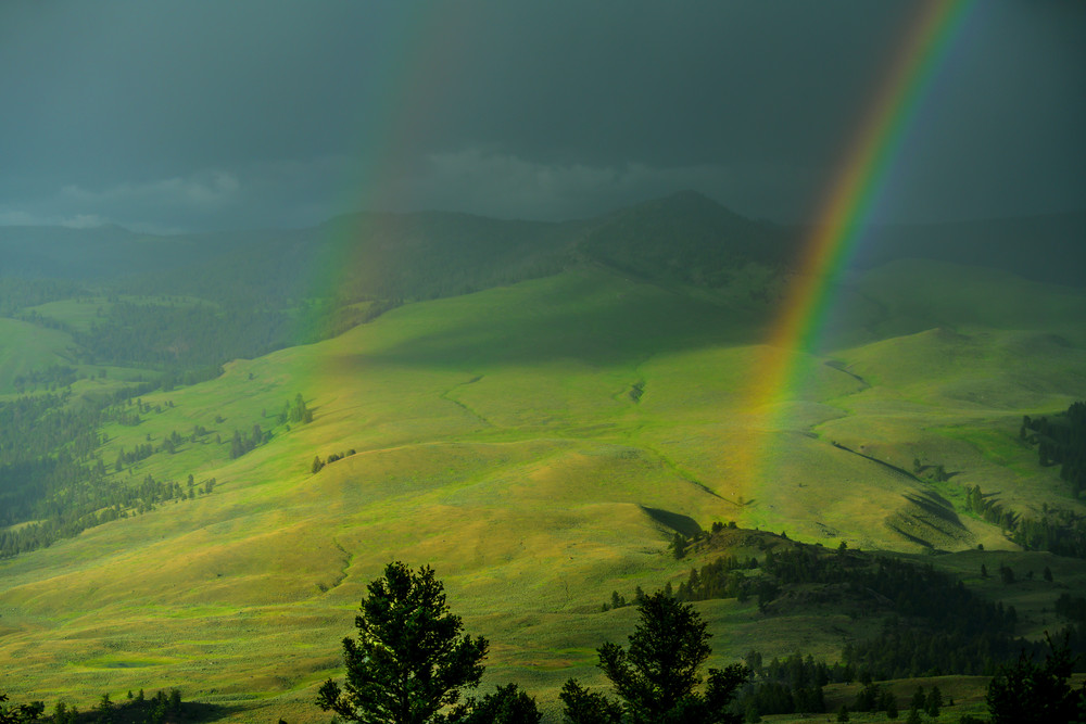 Lucky Charms  Yellowstone Photography Art | Casey McFarland Photography