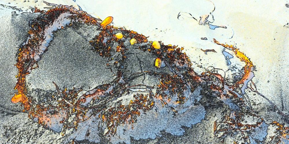 Kelp Detail