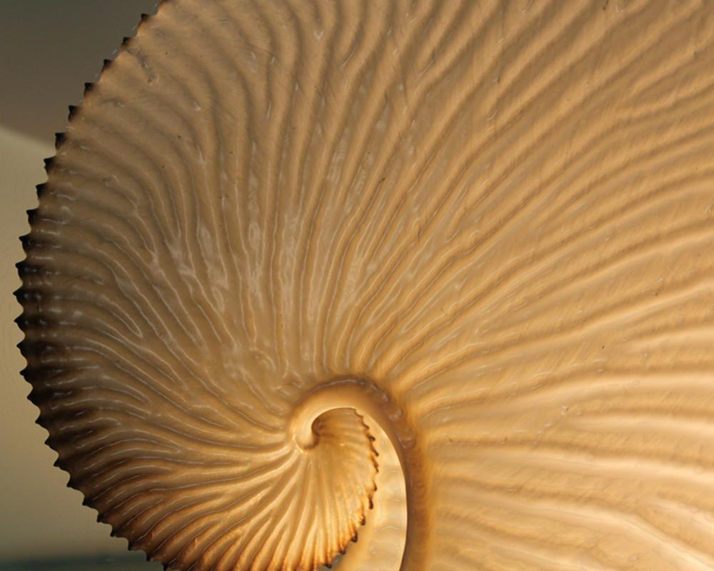 Paper Nautilus Art | Nosco Fine Art