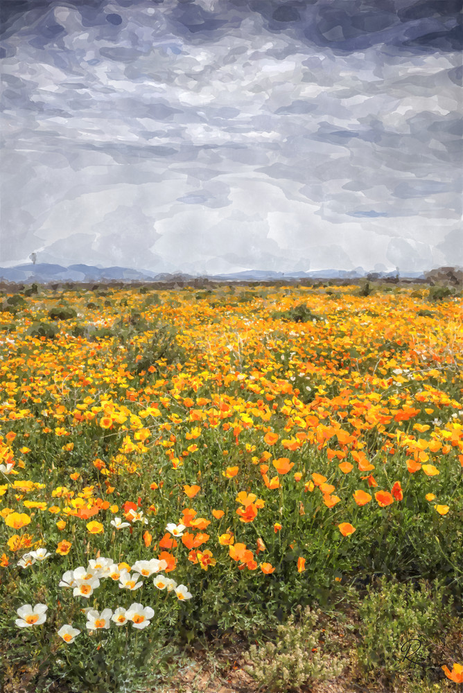 Super Bloom Photography Art | Lion's Gate Photography