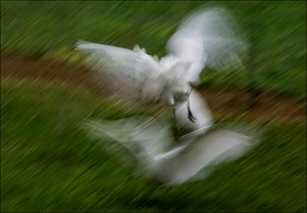 Accouplement Photography Art   Ed Sancious - Stillness In Change