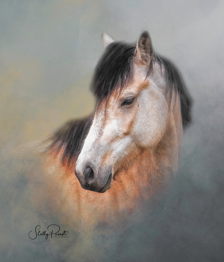 Buckskin Mare   (Colour Option) Photography Art | Shelly Priest Photography