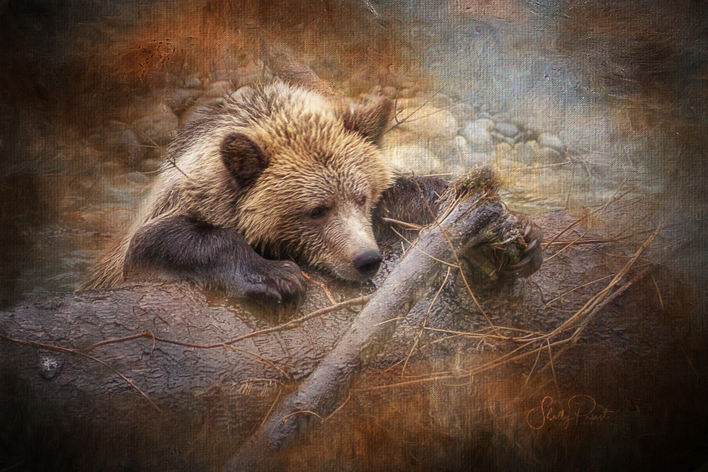 Orford Grizzly Cub Photography Art | Shelly Priest Photography
