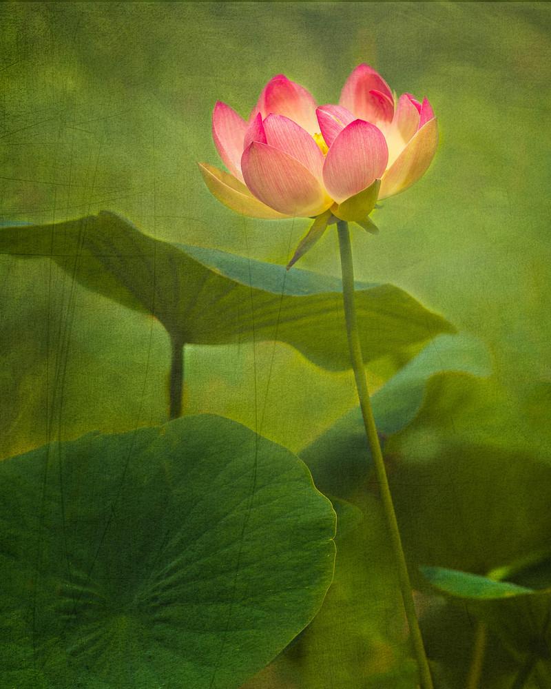 And Still I Rise Lotus Fine Art Print