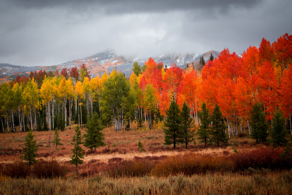 Steamboat Springs Colorado Fall Autumn Aspens