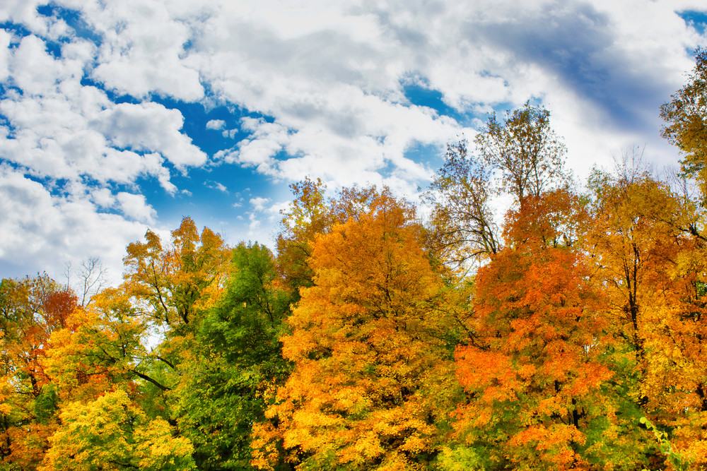 Fall Magic 4