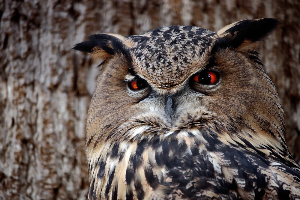 Staring Into The Owl's Soul Photography Art | Austin Marvel